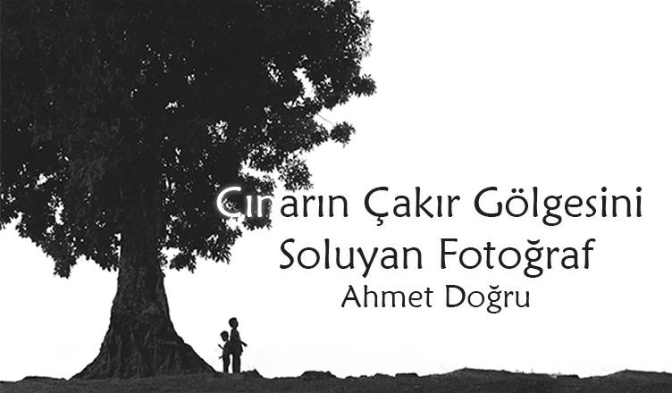 Çınarın Çakır Gölgesini Soluyan Fotoğraf / Ahmet Doğru