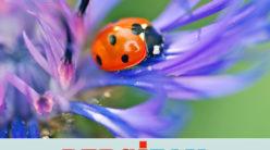 Peygamber Çiçeği'me /H. Kübra Aydın